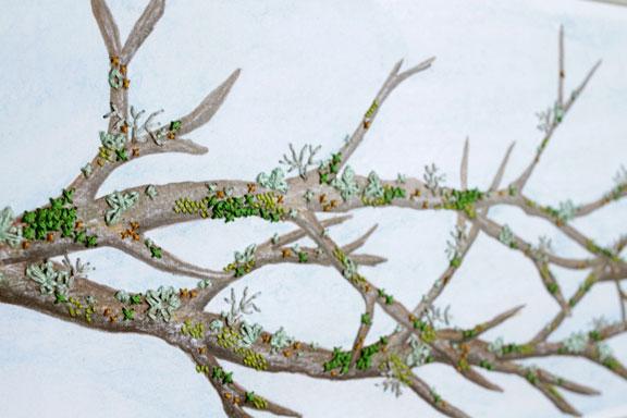 Lichens 1 detail