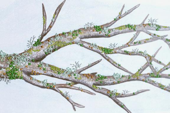 Lichens 2 detail